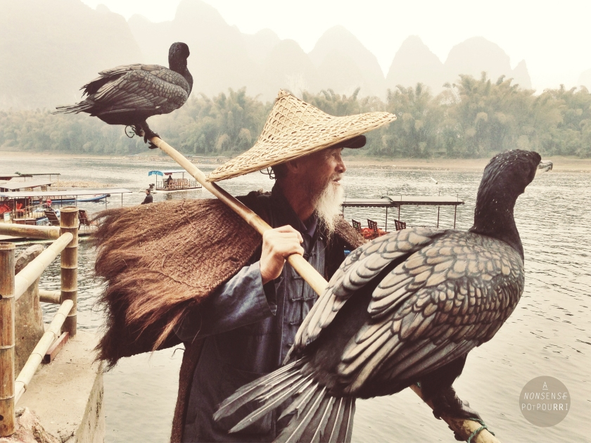 Fisherman with cormorans